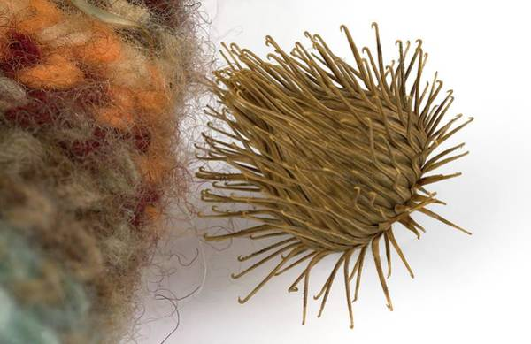 Biomimetics Wall Art - Photograph - Plant Burr Stuck To Woolly Fabric by Pascal Goetgheluck/science Photo Library