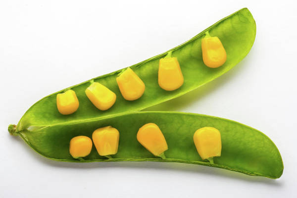 Modified Photograph - Plant Genetics by Mauro Fermariello