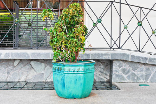 Turqoise Photograph - Plant In Pot by Tom Gowanlock