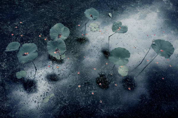 Water Lilies Photograph - Plant In The Galaxy by Ekkachai Khemkum