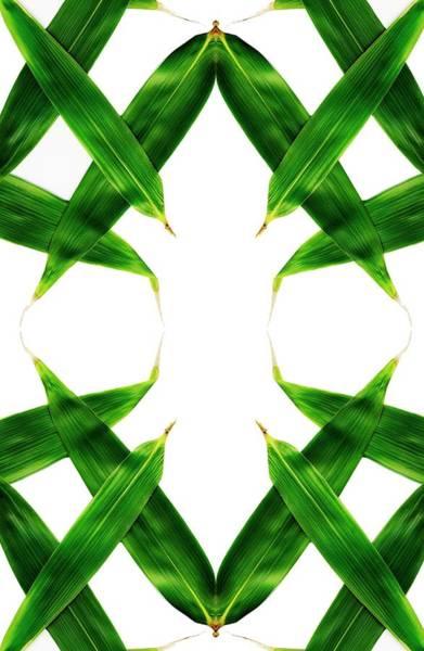 Crisscross Wall Art - Photograph - Plant Leaves by Ian Hooton/science Photo Library