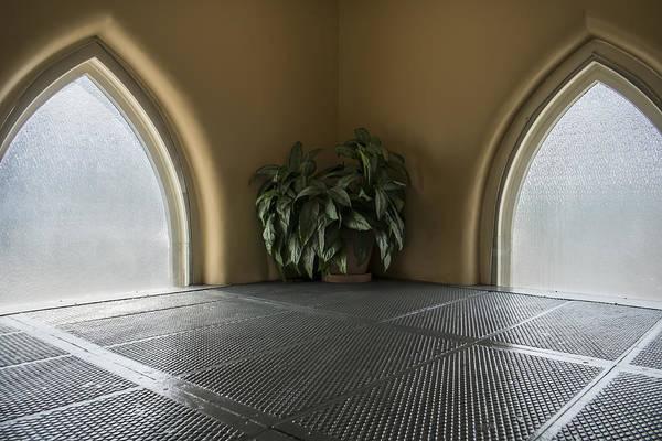 Ryman Auditorium Photograph - Plant Life by Glenn DiPaola