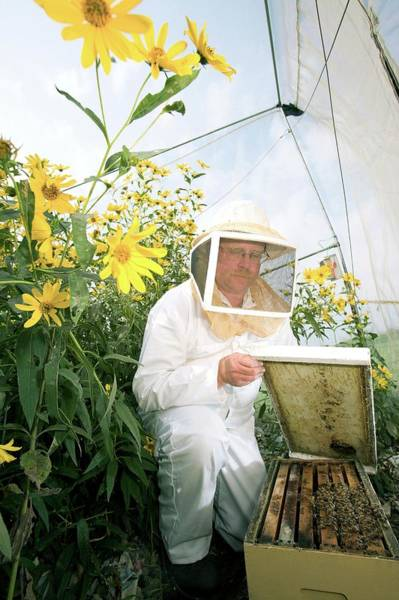Bee Hive Photograph - Plant Pollination by Peggy Greb/us Department Of Agriculture/science Photo Library
