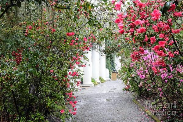 Photograph - Plantation Path In Springtime - Digital Painting by Carol Groenen