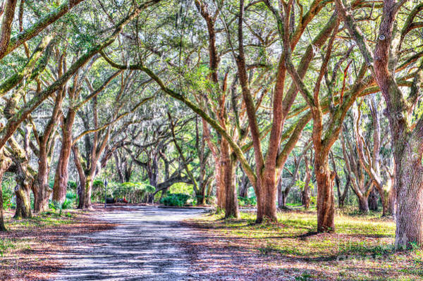 Photograph - Plantation Road by Dale Powell