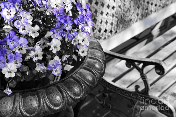 Wall Art - Photograph - Planter With Pansies And Bench by Elena Elisseeva