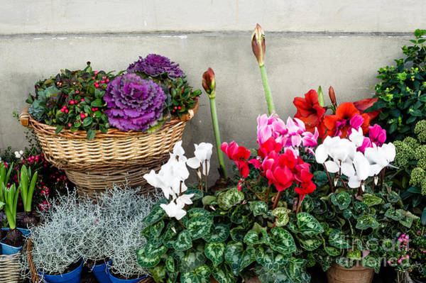 Photograph - Plants And Flowers For Sale by Prints of Italy