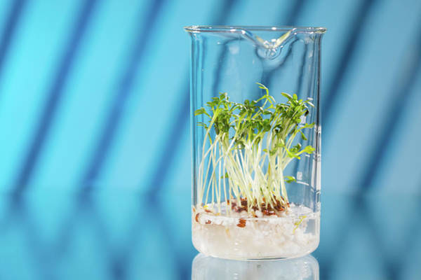 Modified Photograph - Plants Growing In A Beaker In Lab by Wladimir Bulgar