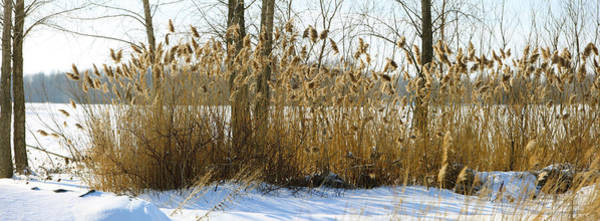 Peacefulness Photograph - Plants In A Snow Covered Field by Panoramic Images