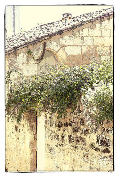 Photograph - Plants Love Old Stones by Heiko Koehrer-Wagner