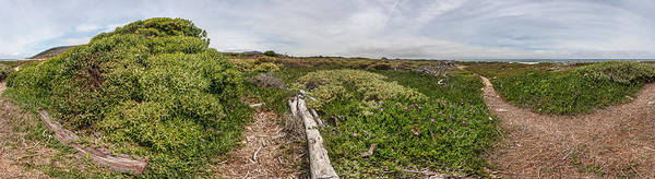 Ventura Photograph - Plants On A Hill, Ventura, Ventura by Panoramic Images
