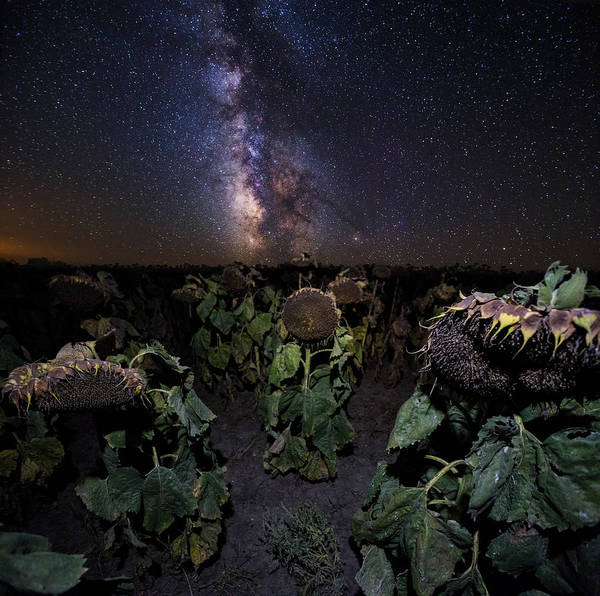 Wall Art - Photograph - Plants Vs Milky Way by Aaron J Groen