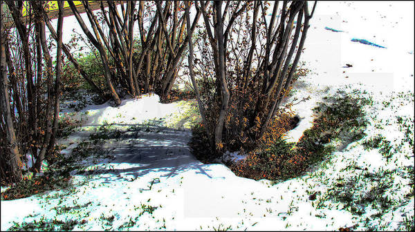 Photograph - Plantsnowscape 2009 by Glenn Bautista