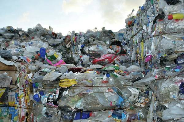 Bottle Green Photograph - Plastic Waste At Recycling Centre by Robert Brook/science Photo Library