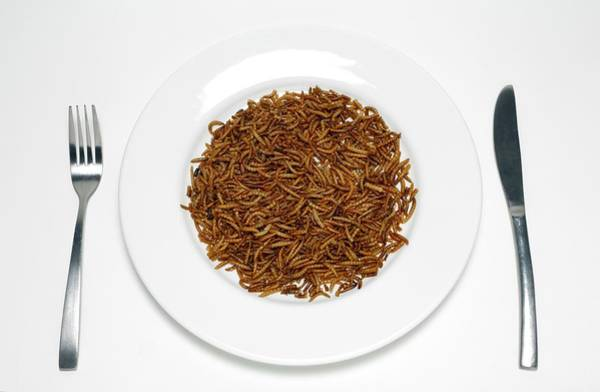 Disgusting Photograph - Plate Of Mealworm by Victor De Schwanberg