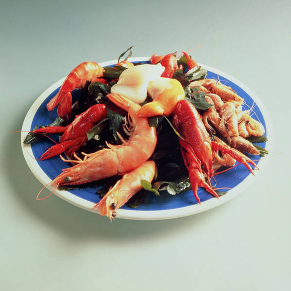 Seafood Photograph - Plate Of Shellfish: Prawn And Lobster Assortment by Cc Studio/science Photo Library