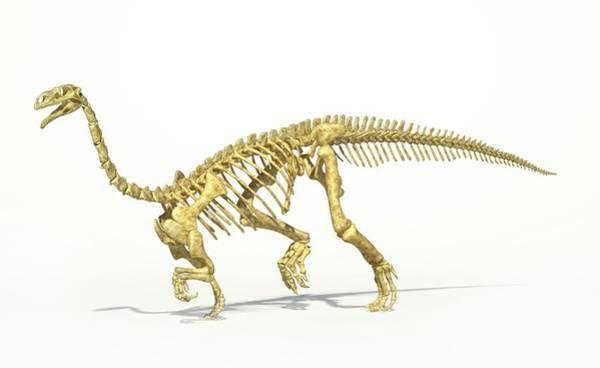 Palaeontology Wall Art - Photograph - Plateosaurus Dinosaur Skeleton by Leonello Calvetti/science Photo Library