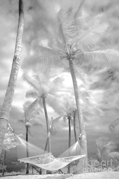 Dione Photograph - Platinum Breeze by Dione Scotland Rivero