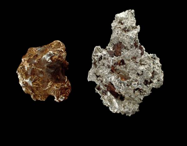 Platinum Photograph - Platinum Nuggets by Natural History Museum, London/science Photo Library