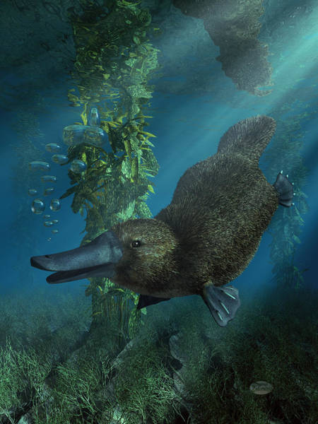 Digital Art - Platypus by Daniel Eskridge