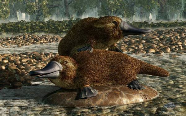 Digital Art - Platypuses by Daniel Eskridge