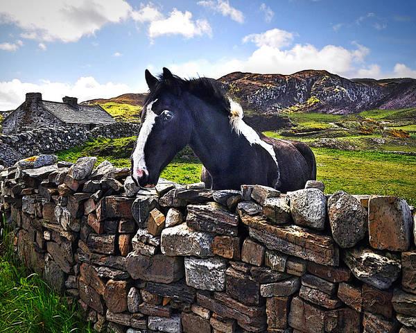 Donegal Digital Art - Playful Encounter by Vicki Lea Eggen