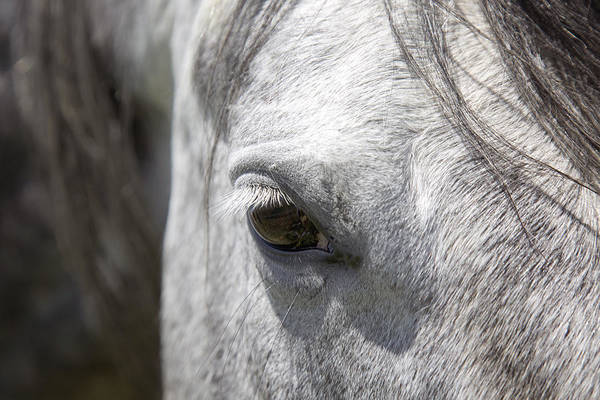 Photograph - Ousted's Eye by Amanda Smith