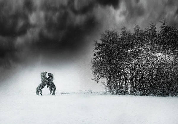 Cold Weather Wall Art - Photograph - Playing by Bernadette Heemskerk