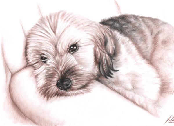 Hund Drawing - Please Don't Disturb by Nicole Zeug