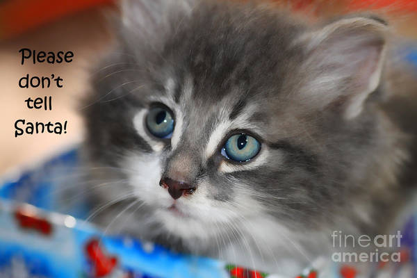 Photograph - Please Don't Tell Santa Kitten by Cathy Beharriell
