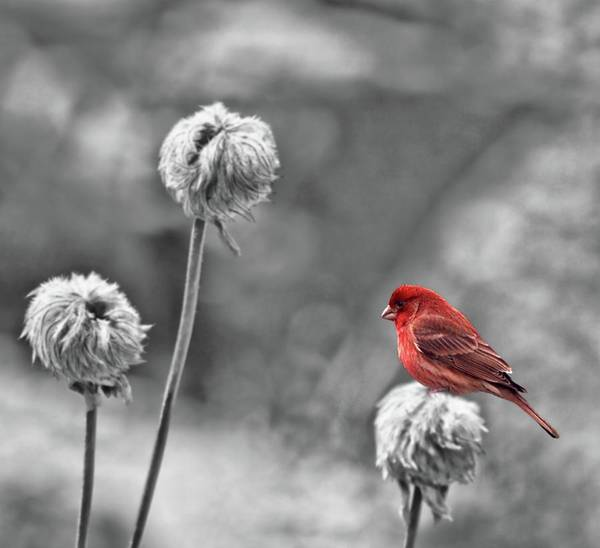 Finch Photograph - Please God I Need Spring by Diane Schuster