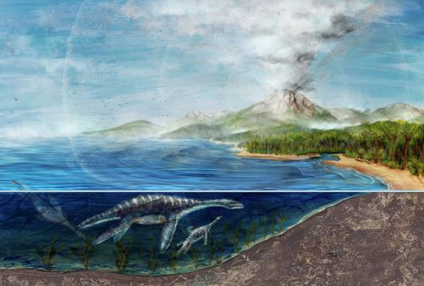 Blast Wave Wall Art - Photograph - Plesiosaurs And Erupting Volcano by Nicolle Rager-fuller, National Science Foundation/science Photo Library