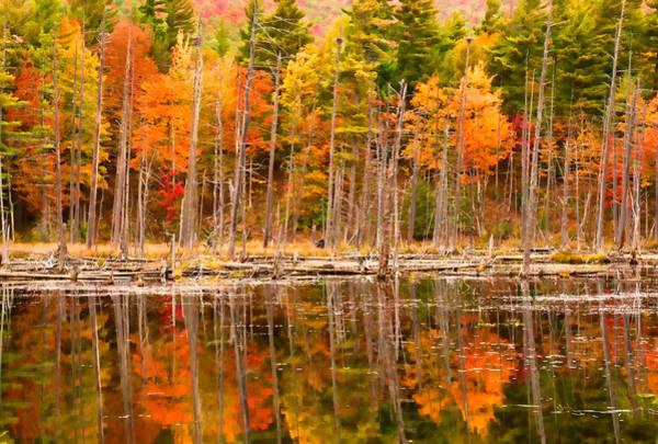 Plethora Of Fall Colors Art Print