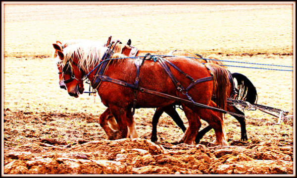 Photograph - Plowing In Red Dirt by Alice Gipson