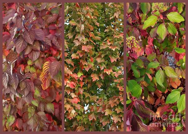 Photograph - Burgundy And Green Autumn Leaves by Carol Groenen
