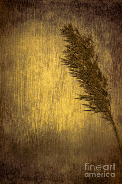 Seed Head Wall Art - Photograph - Plume by Jan Bickerton