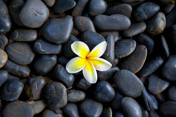 Plumeria Wall Art - Photograph - Plumeria Pebbles by Sean Davey