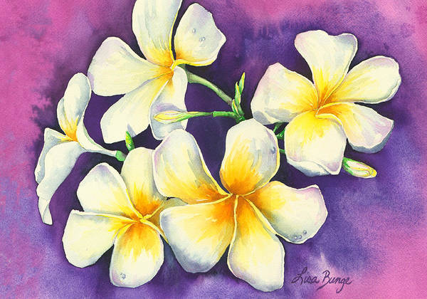 Wall Art - Painting - Plumeria Perfection by Lisa Bunge