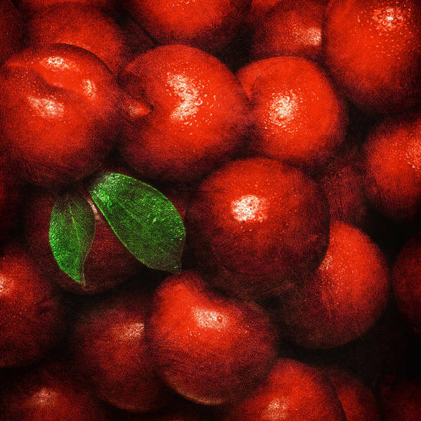 Photograph - Plums  by Mauro Celotti