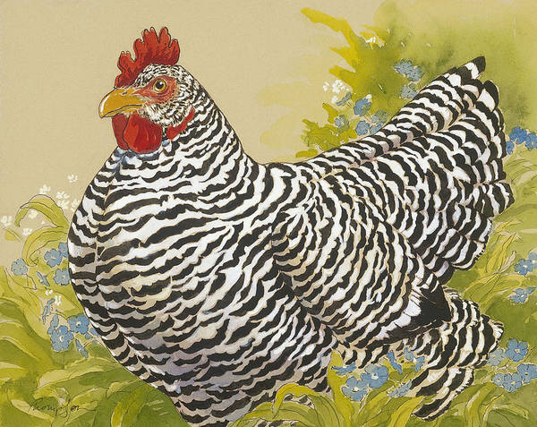 Wall Art - Painting - Plymouth Rock Hen 4 by Tracie Thompson