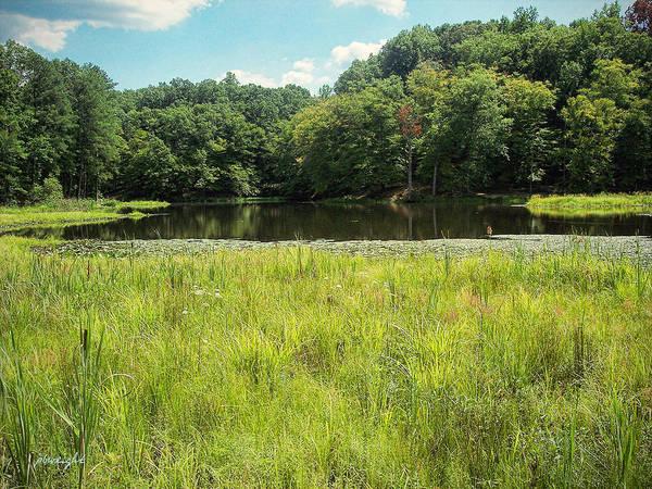 Photograph - Pocahontas State Park by Paulette B Wright