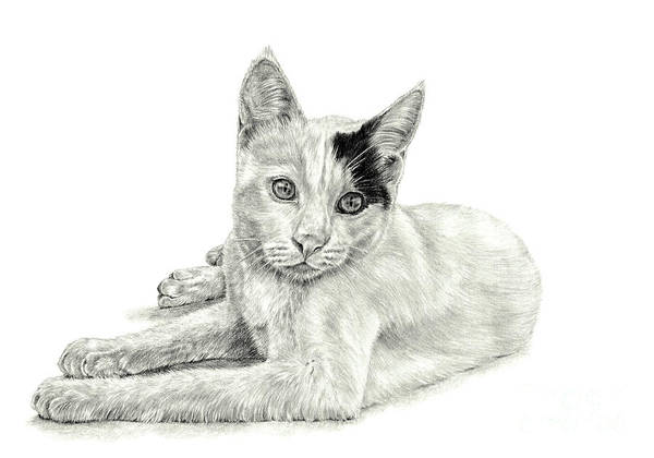 Drawing - Podge by Pencil Paws