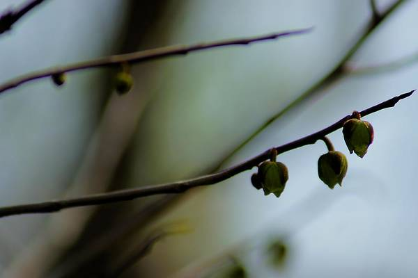 Photograph - Pods Abstract by Beth Akerman