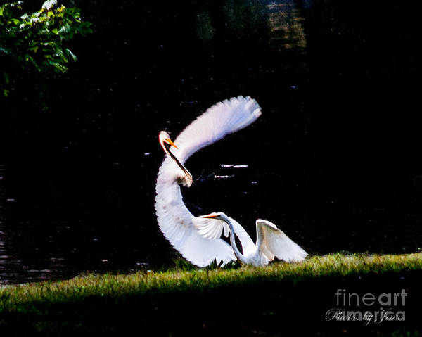 Wall Art - Photograph - Poetry In Motion ... by Jinx Farmer