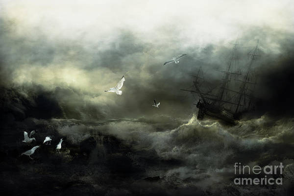 Seagull Digital Art - Point Danger by Shanina Conway