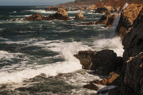 Photograph - Point Lobos 2 by Lee Kirchhevel