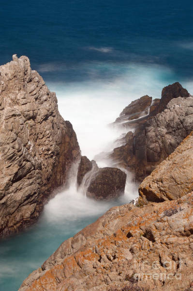 Wall Art - Photograph - Point Lobos Number Two by Catherine Lau