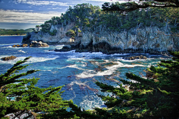Photograph - Point Lobos by Ron White