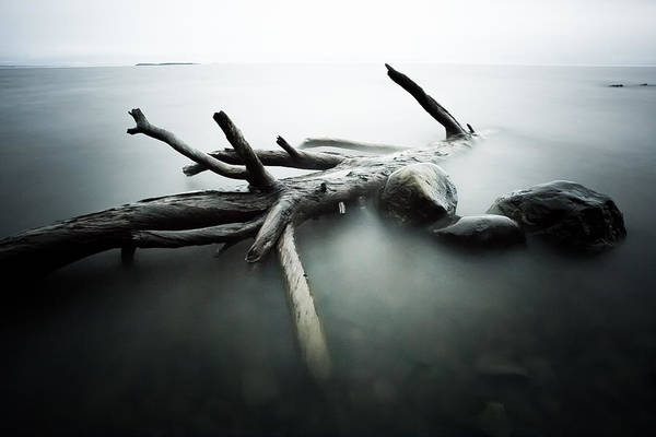 Canon Eos 6d Photograph - Point Place Driftwood by Jakub Sisak