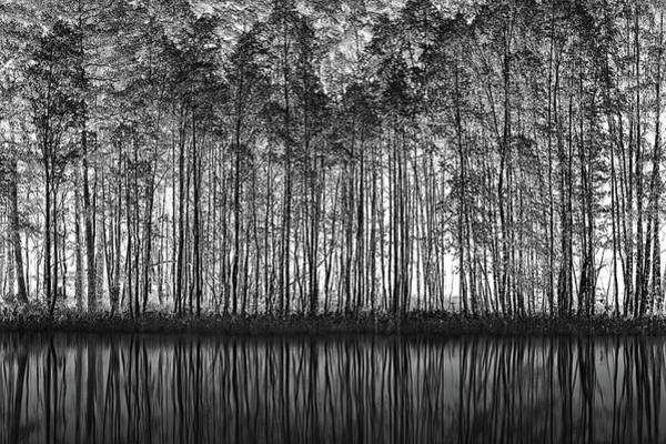 Trunks Photograph - Pointillism Nature by Roswitha Schleicher-schwarz